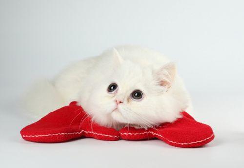 Чим лікувати глисти у кішки