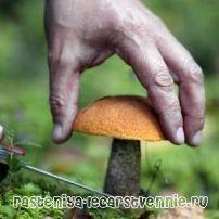 Чим корисні і шкідливі гриби для людини?