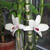 Орхідея квітка: догляд в домашніх умовах
