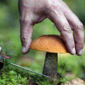Отруєння грибами - симптоми, лікування