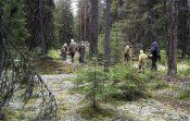 Їстівні рослини лісу