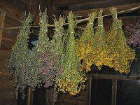 Сушіння, зберігання лікарських рослин