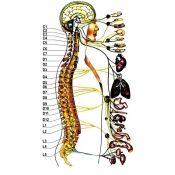 Захворювання хребта людини: види, симптоми